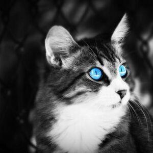 Wallpaper-white-background-cat-black-blue-eyes-backgrounds-desktop-animals-array-wallwuzz-hd-wallpaper-3007-350x350