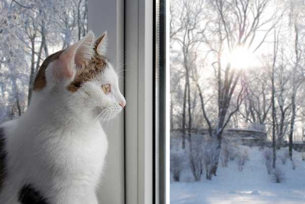 Sad-cat-snowy-window 0