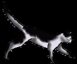 Moonpaw- By Dark (Adjusted)