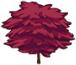 Ornamental Maple