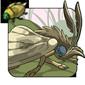 False Veneer Moth