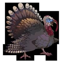 Woodland Turkey