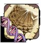 Peregrine Gene