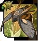 Catocala Moth