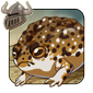 Desert Rain Frog Companion