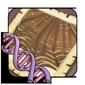 Striation Gene