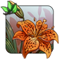 Speckled Fire Lily