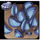 Rainbow Mussels