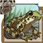Marsh Frog Companion
