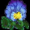 Blue Vein Pansy