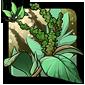Crisp-leaf Amaranth