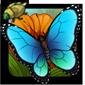 Vibrant Flutterer