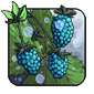 Seaberry
