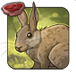 Old World Rabbit