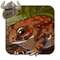 Toad Companion