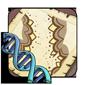Lace Gene