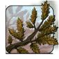 Dried Cedar Branch
