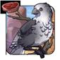 Greyback Sparrow