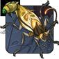 Fanned Cockroach