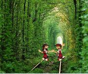 En el bosque (2)