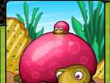 Jellybacks