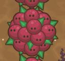 Raspberry Puff - big