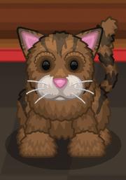 Brownie-Cat