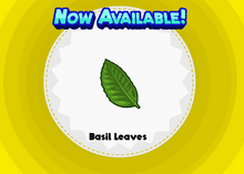 Basil Leaves (ZHD)