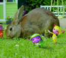 Project Rabbit