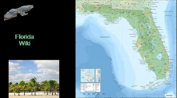 Image - 400px-Florida topographic map-en.jpg | Florida Wiki | FANDOM ...