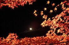 1280px-Arashiyama Hanatōro, Nison-in 嵐山花灯路・二尊院 紅葉と月 DSCF5361