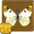 Sooty Orange Tip§Headericon