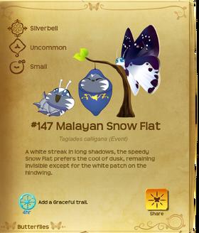 Malayan Snow Flat§Flutterpedia