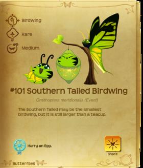 Southern Tailed Birdwing§Flutterpedia