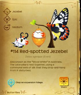Red-spotted Jezebel§Flutterpedia