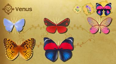 Venus Set§Flutterpedia