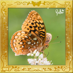 Flutterfact20150217AphroditeFritillary