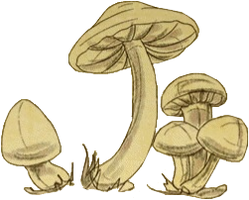 Sketch§ThreeMushrooms