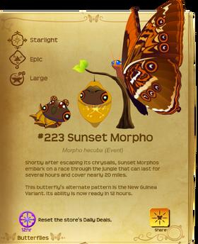 Sunset Morpho§Flutterpedia Upgraded