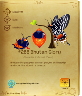 Bhutan Glory§Flutterpedia