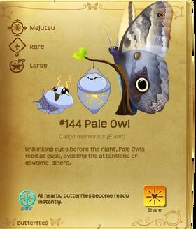 Pale Owl§Flutterpedia