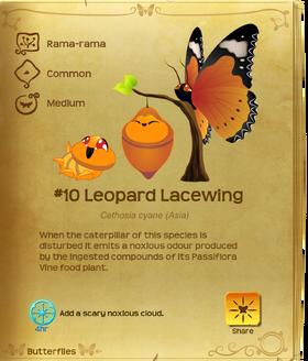 Leopard Lacewing§Flutterpedia