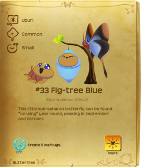 Fig-tree Blue§Flutterpedia