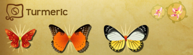 Turmeric Set§Flutterpedia