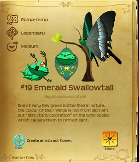 Emerald Swallowtail§Flutterpedia