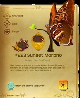 Sunset Morpho§Flutterpedia