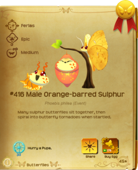 Male Orange-barred Sulphur§Flutterpedia