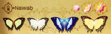 Nawab Set§Flutterpedia