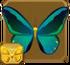 Obi Island Birdwing§Headericon