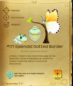 Splendid Dotted Border§Flutterpedia
